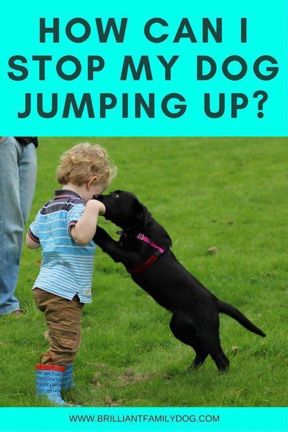 How Can I Stop My Dog Jumping Up Dog Training Easiest Dogs To