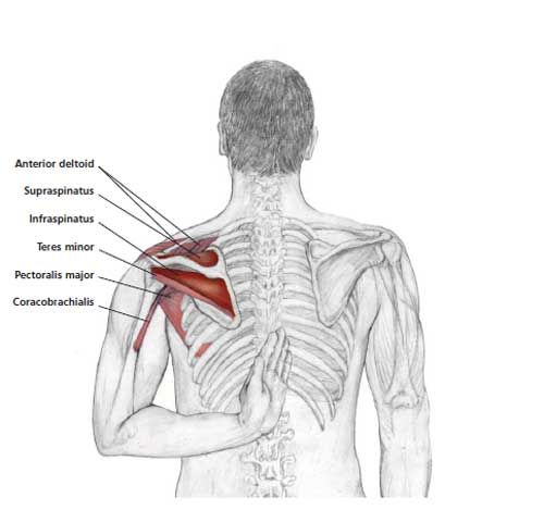 Reaching Up Shoulder Stretch - Common Neck & Shoulder Stretching Exercises | FrozenShoulder.com