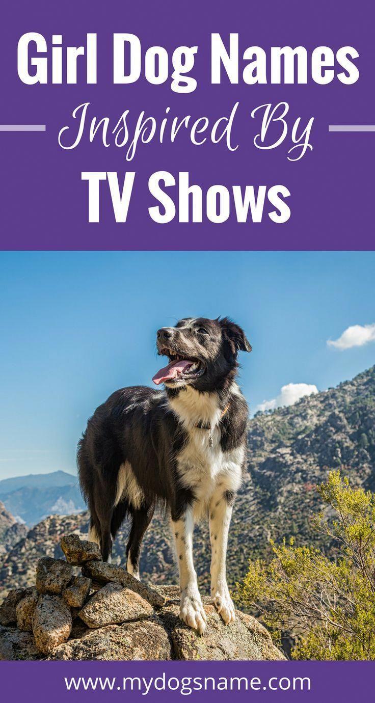 Enjoyable delivered dog lovers Download app | Spectacular