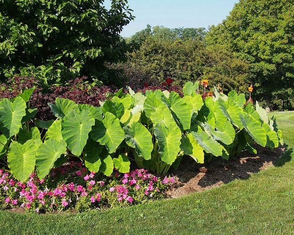 Cool Plants For Wet Soil