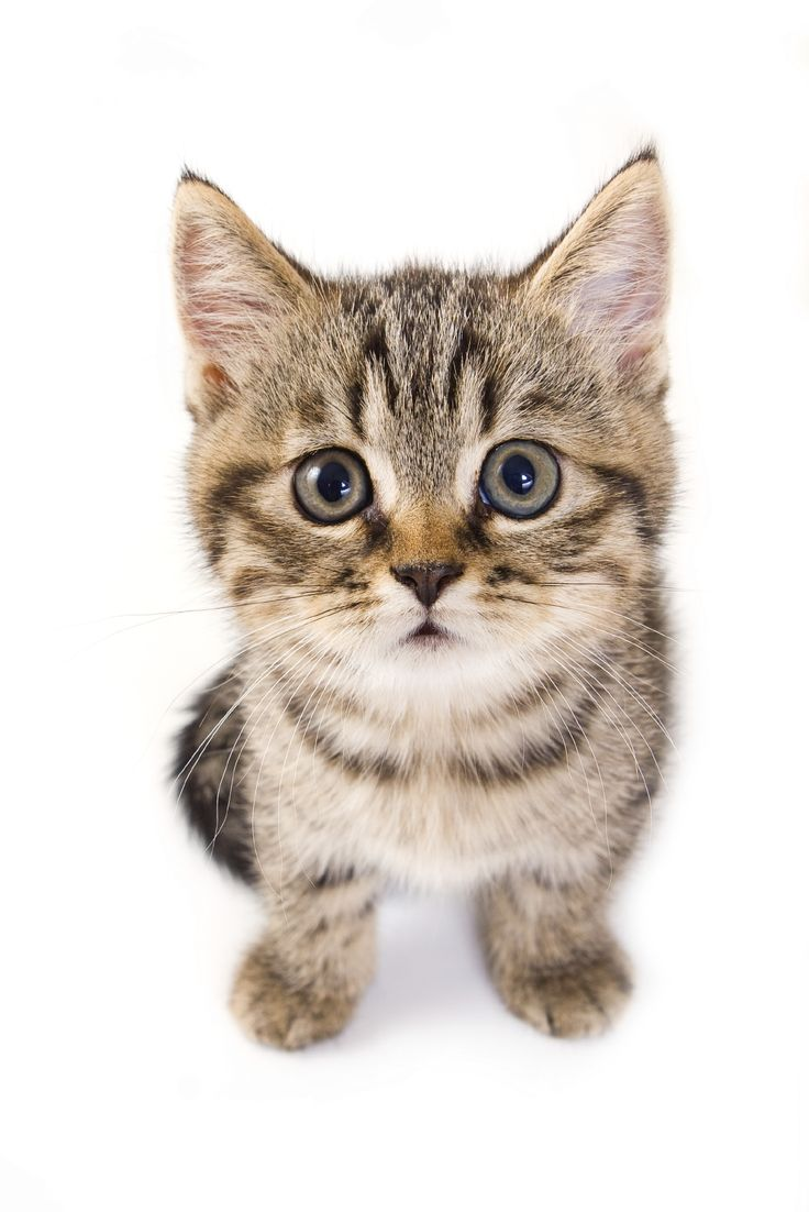 Introducing children to a new cat or kitten   Vale Vets