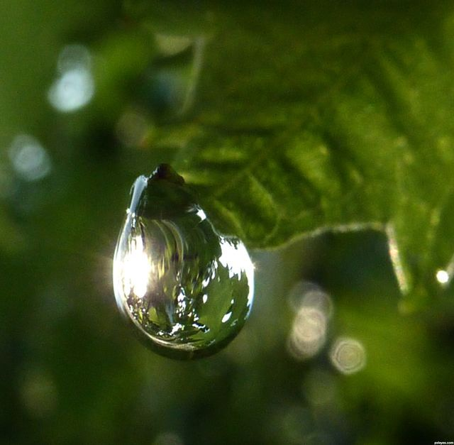 Beautiful Raindrops Photos