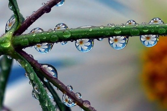 35 GLEAMING EXAMPLES OF NATURE MACRO PHOTOGRAPHY