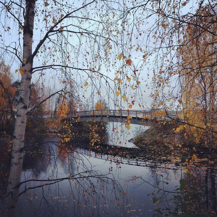 Photo by Visit Rovaniemi @visitrovaniemi instagram Don't you just wish you could walk on that bridge?  #autumn #colours #ruska #bridge #autumncolors #nature #instanature #travelgram #visitrovaniemi #laplandfinland #visitfinland #thisisfinland #rovaniemi #lapland #finlandlapland #filmlapland #arcticshooting