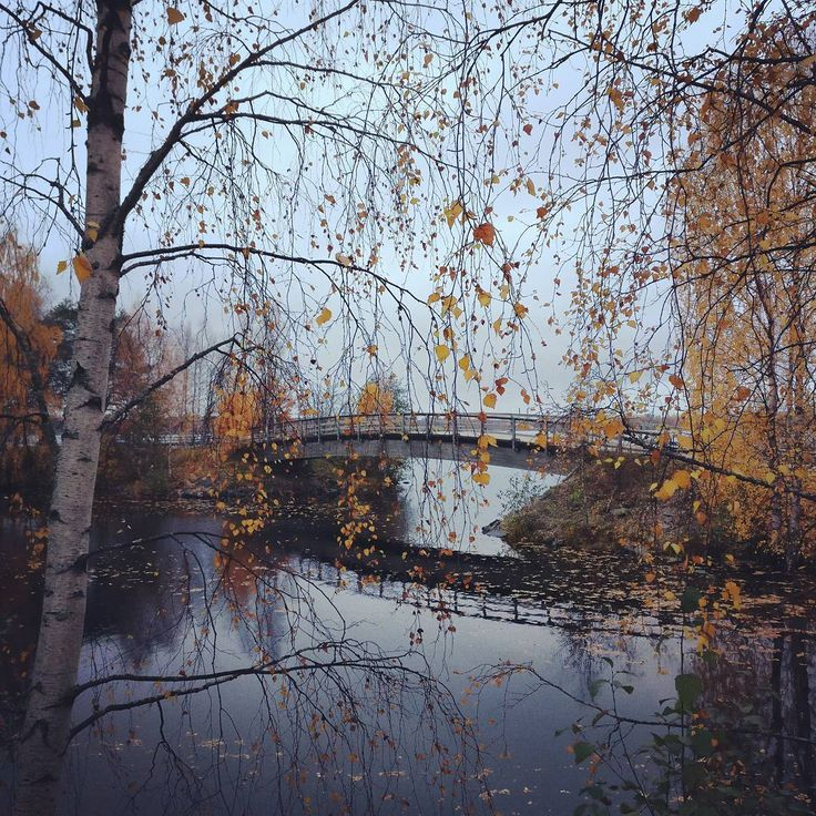 Photo by Visit Rovaniemi @visitrovaniemi instagram Don't you just wish you could walk on that bridge?  #autumn #colours #ruska #bridge #autumncolors #nature #instanature #travelgram #visitrovaniemi #laplandfinland #visitfinland #thisisfinland #rovaniemi #lapland #finlandlapland #filmlapland #arcticshooting