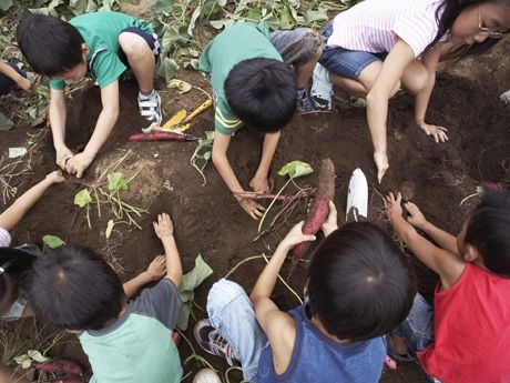 10+ lesson plans for bringing Earth Day to your classroom.