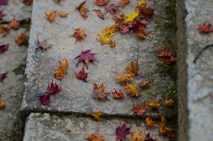 Fallen leaves on stone steps - null