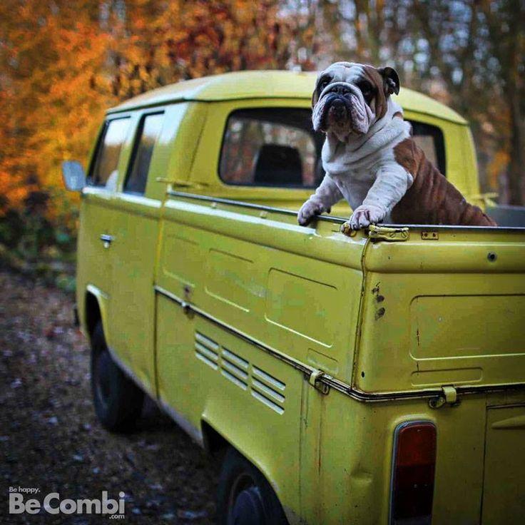 THE DOG IS THE IISMAEL #VW #ValleyMotorsVW