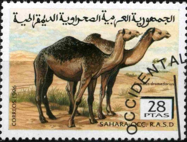 Stamp: Dromedary (Camelus dromedarius) (Cinderellas) (Sahara Occ.) Col:EH 1996082