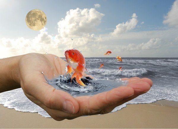 7 ступеней ясности и понимания для исполнения задуманного | Гармония Сознания