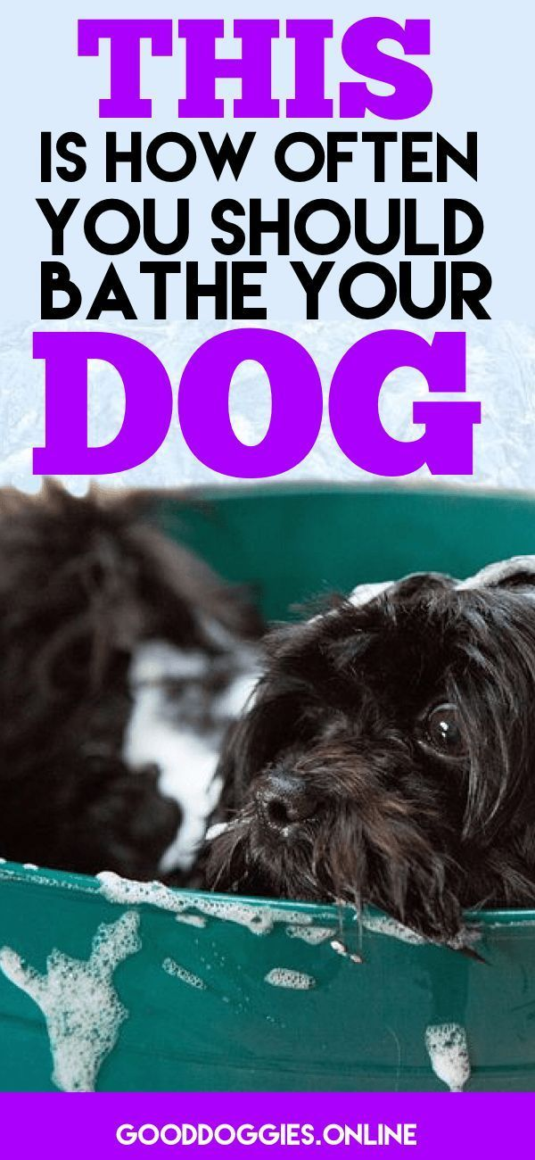 How Often To Bathe A Dog Beagle Dog Tips Dog Grooming Tips