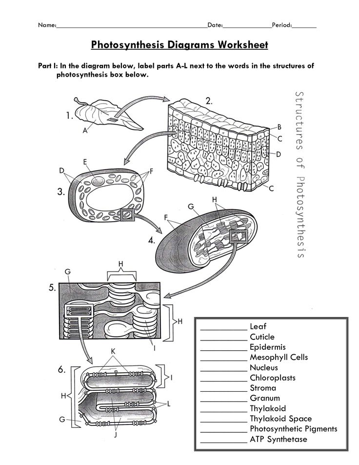 Photosynthesis NGSS Scaffolded Worksheet | Photosynthesis and ...