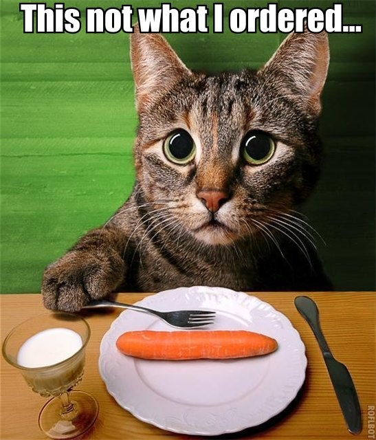 the Look of utter disappointment ... (meanwhile, cats are carnivores. So if you are vegan kitty lover, it might be best to observed them from afar.)