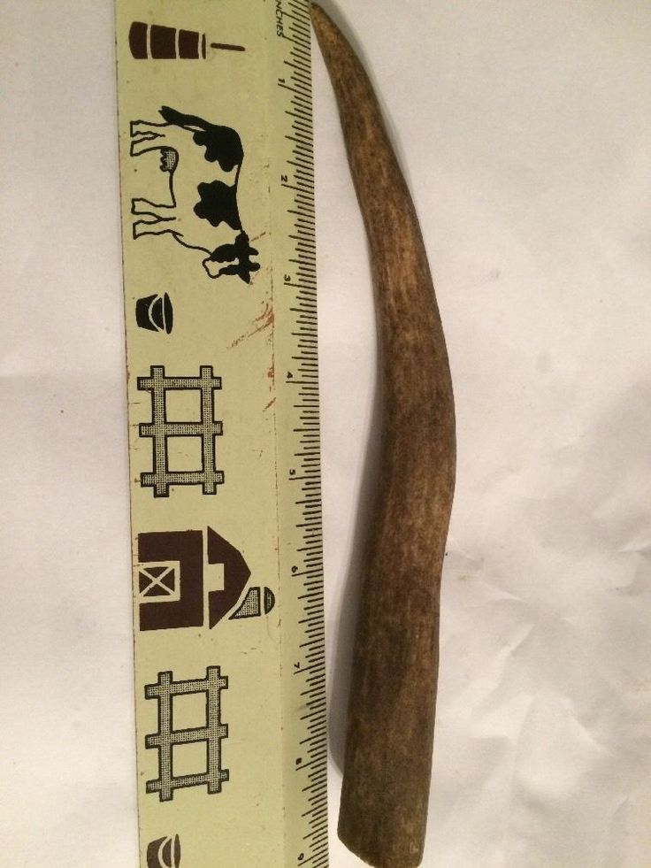Elk Antlers Knife Handle Dog Chew  Craft Projects 8 Plus Inches  C600