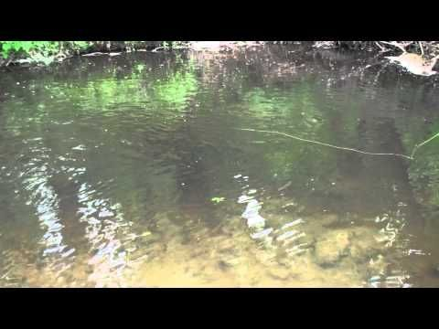 Streamer fishing explained- Part 2.m2ts - YouTube