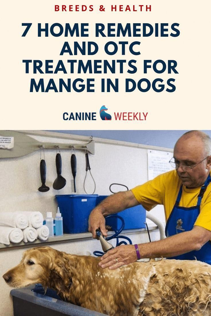 how to treat mange for dogs
