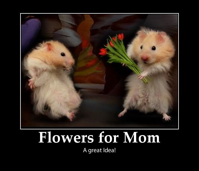 Funny International Women S Day Memes : Best images about mothers and mother s day tribute on
