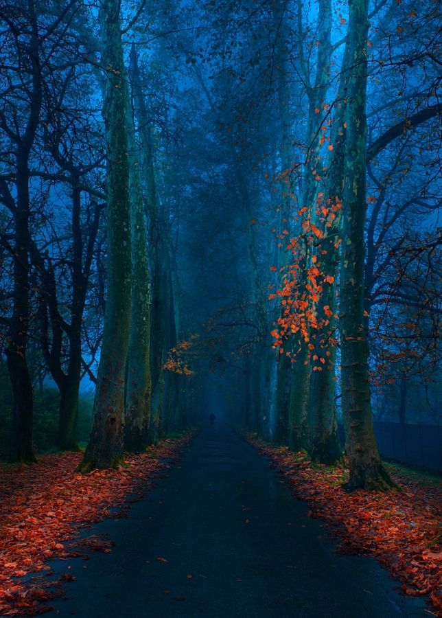 """"""" Blue Pathway """" by Mevludin Sejmenovic #xemtvhay"""