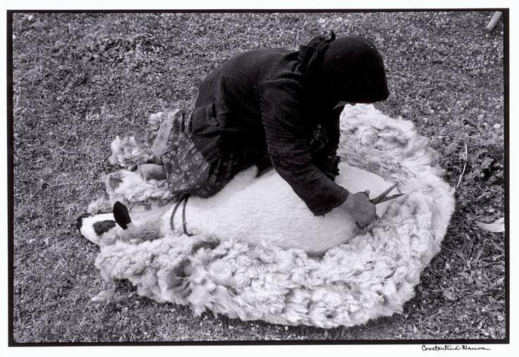 """Constantine Manos  Greece. Crete. 1964. Shearing a sheep.. """"A Greek Portfolio"""" p.98 © Costa Manos/Magnum Photos"""