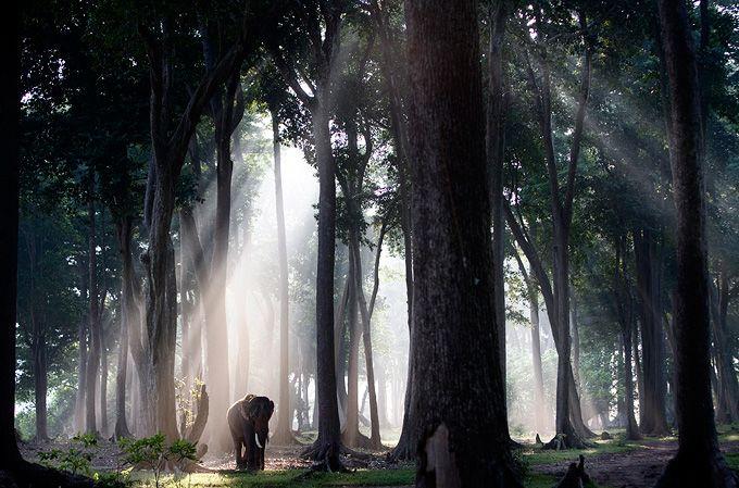 wandering elephant  photo by Steve Bloom