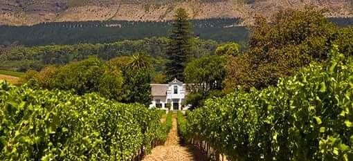 Interesting wine estates to visit in South Africa - The Klein Constantia Estate... Dating Back to 1685 and described as one of the world's most beautiful wine estates, Klein Constantia is set amidst ancient trees on the upper foothills of the Constantiaberg, with views across False Bay.... #tourism #extremefrontiers #wineroute #adventure #holiday #vacation #vineyard #tourist #travel