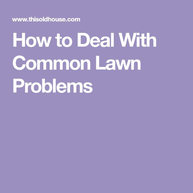 How to Deal With Common Lawn Problems
