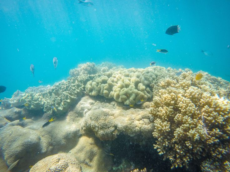 Coral in the coral sea