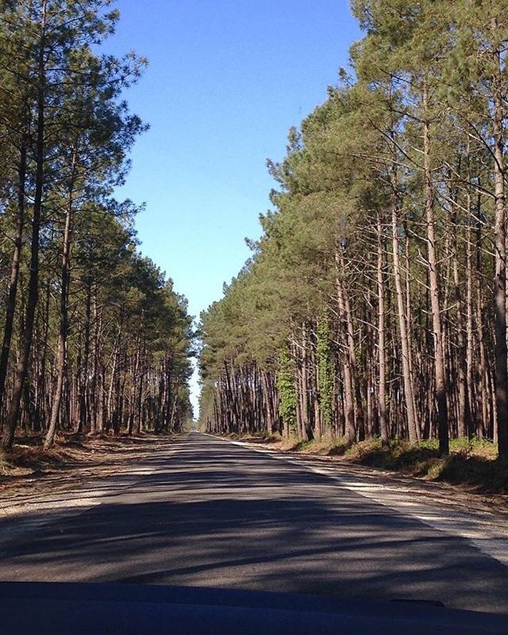 On entendrait presque les cigales ! #REPOST : @axelledrt  #Castets #Landes #DestinationCLN