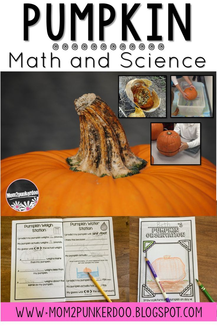 Pumpkin math and science inquiry and investigation.