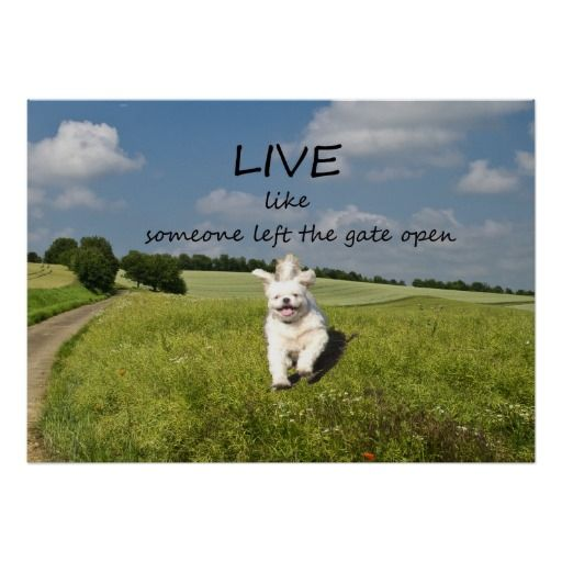 Live Like Someone Left The Gate Open Quote: 17 Best Images About Life Poster On Pinterest