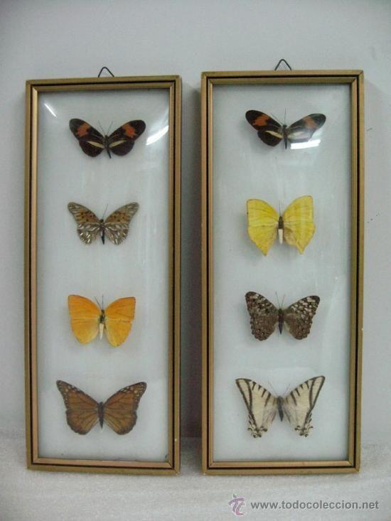 cuadros de mariposas cristal convexo vintage