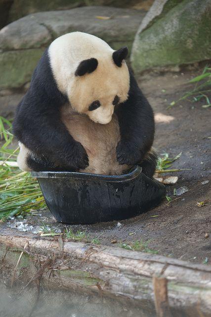 hose-chubby-bears-in-bathtubs-teen-gets-his