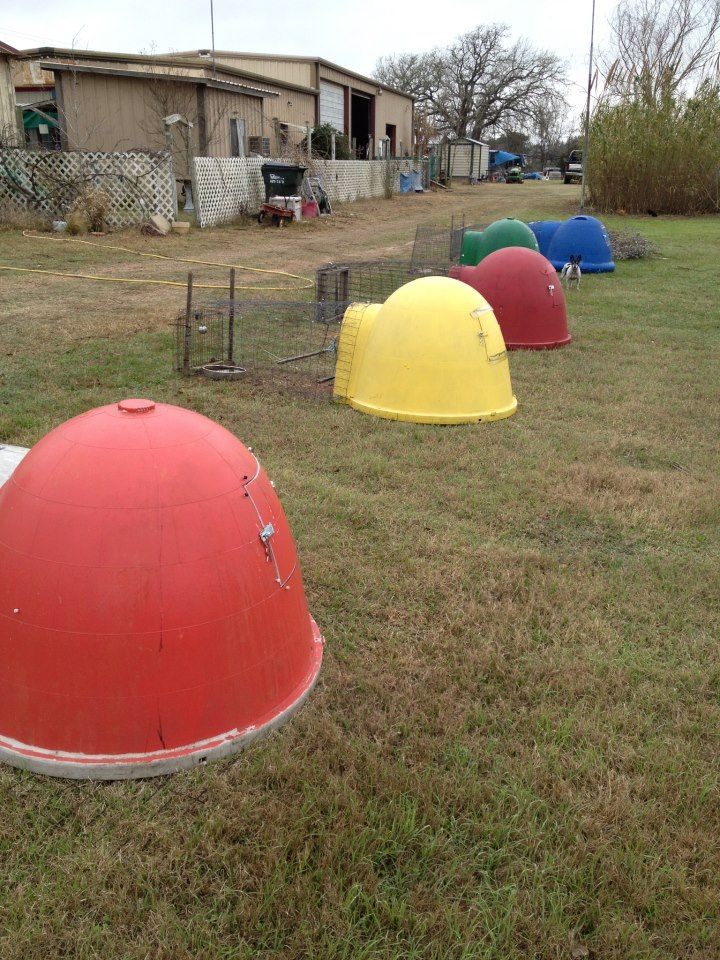 Chicken coop condo complex made from upcycled dog igloos. GENIUS!