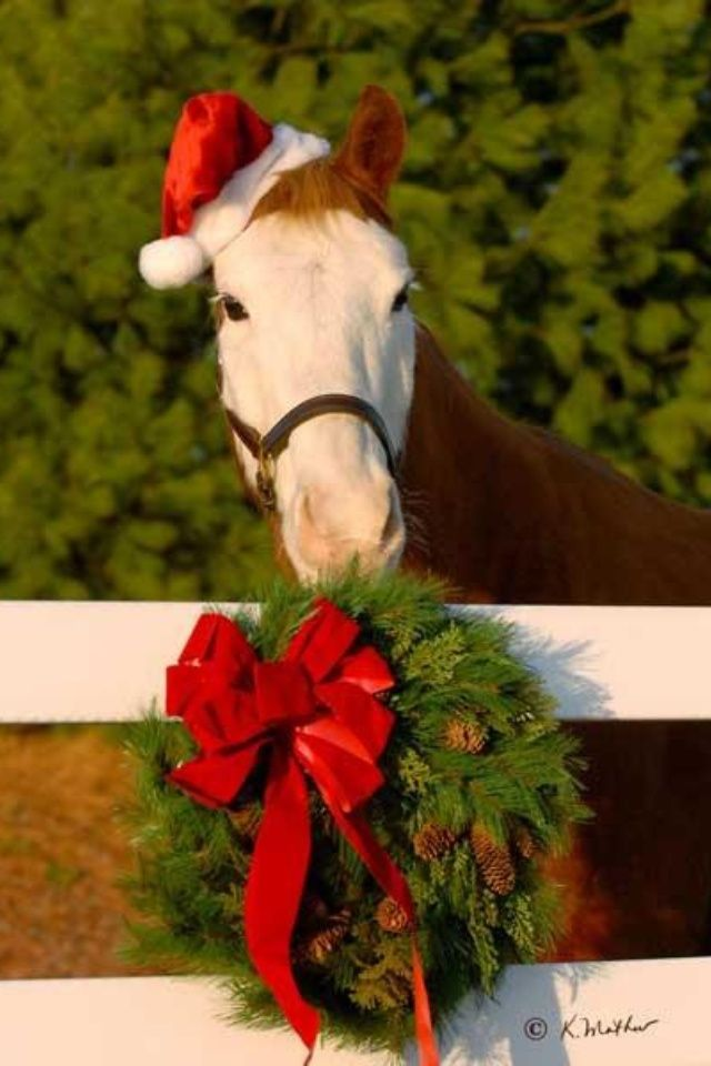 Christmas Picture Ideas With Horses Horse Idea Don T Steal Anyone Please