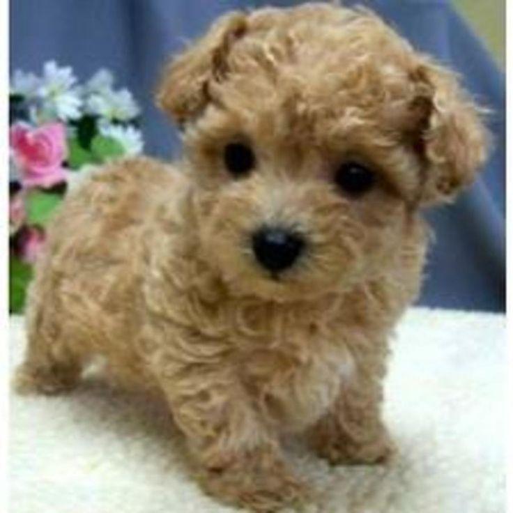 Long Island Puppy Shelter