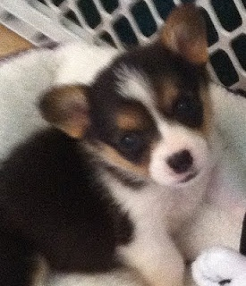 My little Darcy, at 6 weeks old...