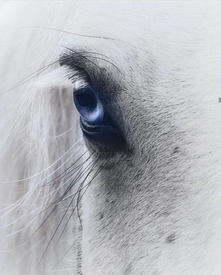 Pferde Augen Pferde Fotografie Schone Pferde Gemalte Pferde