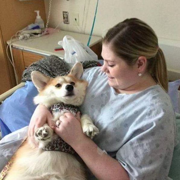 A new program at Juravinski Hospital in Ontario, Canada, allows for pets to visit their sick owners in an attempt to make them feel better. While therapy dogshave been used for some time, thisis the first program of its kind inCanada. Donna Jenkins, founder of Zachary's Paws for Healing, was inspired by her nephew, Zachary...