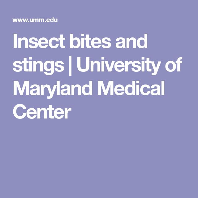 Insect bites and stings | University of Maryland Medical Center