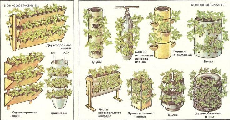 ВЫРАЩИВАНИЕ КЛУБНИКИ КРУГЛЫЙ ГОД. Прибыльный бизнес. Потратив всего лишь 50 - 60 долларов на посадочный материал, а если вы можете его взять бесплатно - то прибыль будет ещё больше, то можно выращивать круглогодично клубнику на площади в 10м² и собирать урожай от 120 до 150 кг клубники.