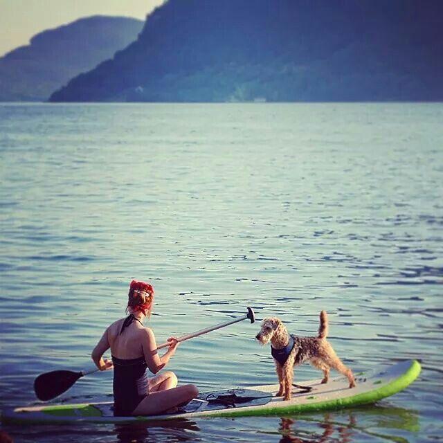 Paddle board dog. Norway, hjelmeland fjord. Photo: tove opsahl