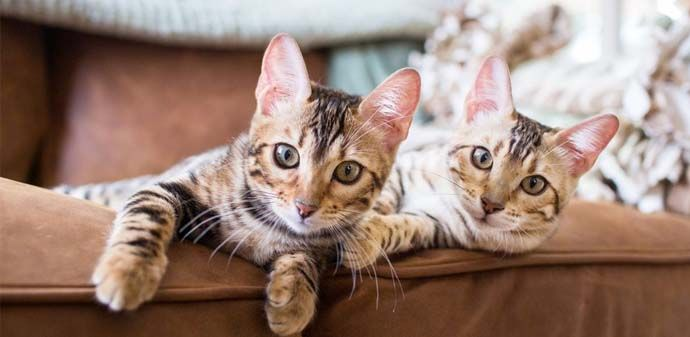 Aplikasi Pencinta Kucing - Cat Breeds | Teknologia