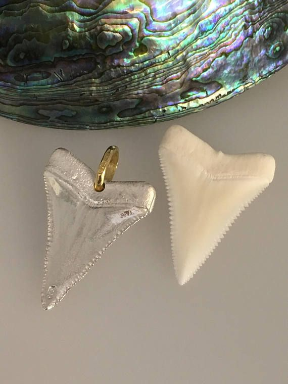 Great White Shark Tooth   Fabulous Silver & 18ct Yellow Gold