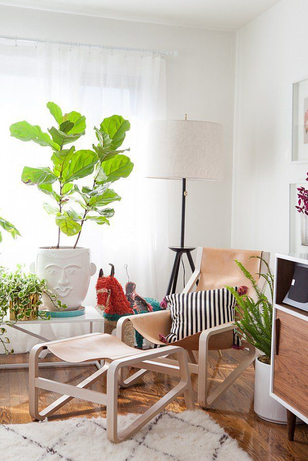 Fiddle Leaf Fig Tree CareDecor, Living Rooms, Interiors, Fiddle Leaf, Leaf Figs, Emily Henderson, Leather Chairs, White Wall, Indoor Plants