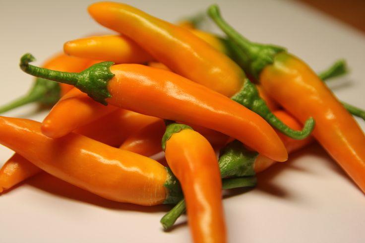 The orange colored Bulgarian Carrot Hot Pepper, medium fiery and very fragrant, perfect for vegetable or legumes soups - Il peperoncino arancione Bulgarian Carrot, mediamente piccante e molto profumato, ottimo per minestre di verdure o zuppe di legumi