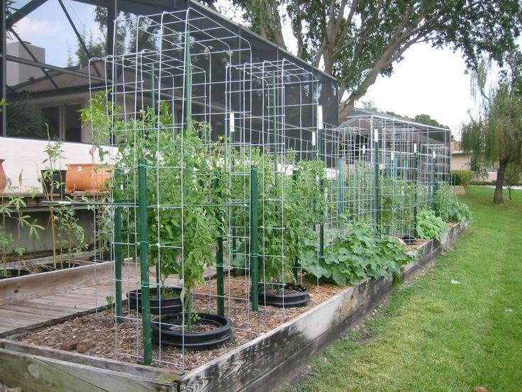 102 best trellises images on pinterest vegetable garden for Vegetable garden trellis designs
