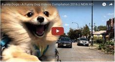Grappige honden filmpjes