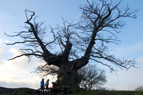 The White Leaved Oak. 'The Remains of an Altar'we went here with Herefordshire pagan Moot