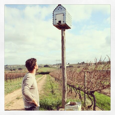 the brilliant idea of our winemaker to reduce the number of gerbils! #vineyards #anwilka #stellenbosch