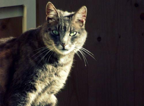 Chat_SERIE 1 : Un chat dans la cabane. > Appareil photo Bridge, Fujifilm Finepix S4000 > Retouches photo